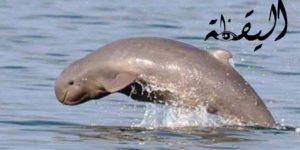 قصة الدلفين